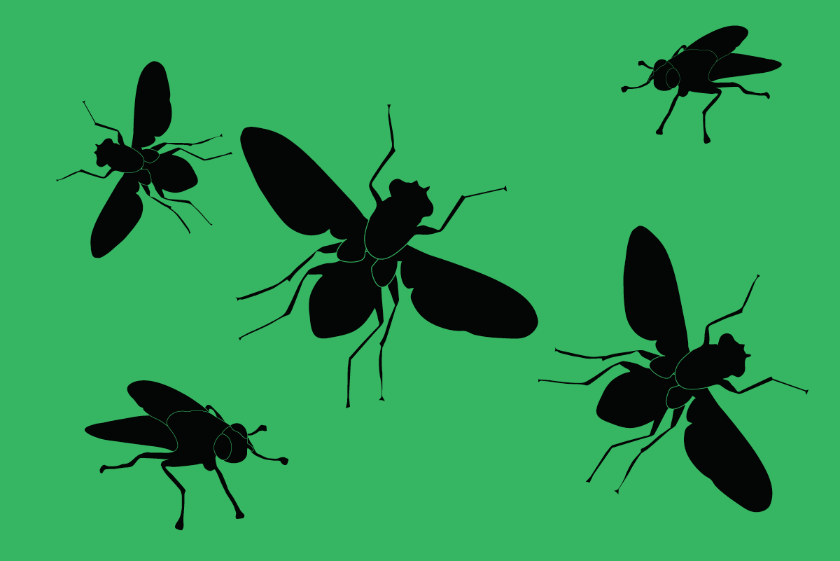Flies | A&S Pest Control | Servicing the Hagerstown Area