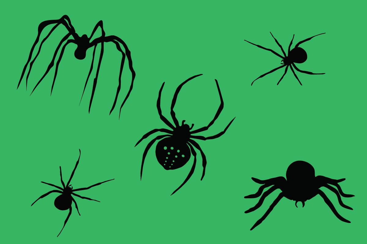 Spiders_hagerstown-pest-control