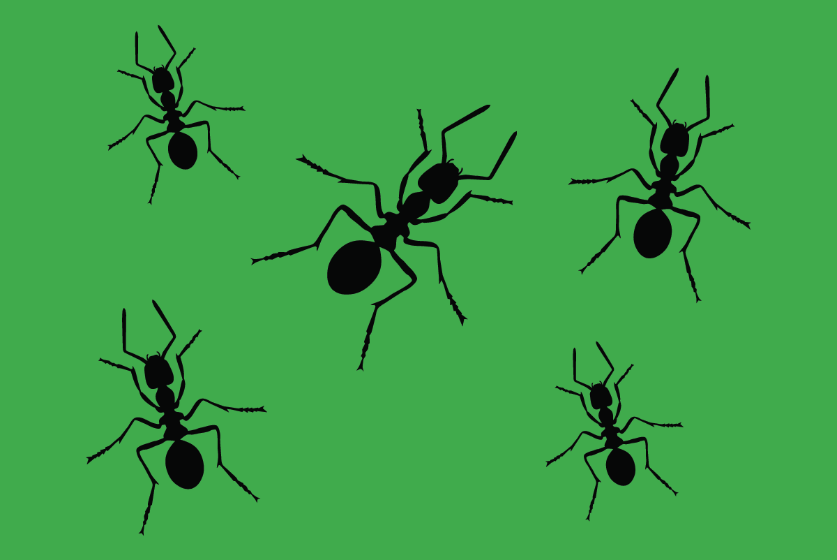 Termite Inspections | A&S Pest Control | Servicing the